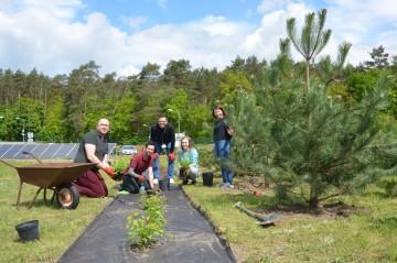 30 drzew na 30 lat WObit