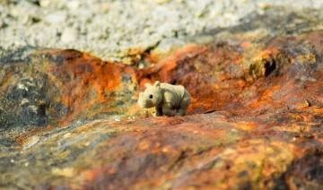 szary nosorożec wczasach VUCA